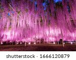 Ashikaga Flower Park In Tochig...