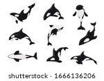 set of killer whale orcinus... | Shutterstock .eps vector #1666136206