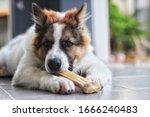 Bangkaew Brown Thai Dog Eats...