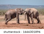 Closeup Of Two African Elephant ...