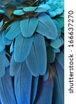 beautiful blue macaw feathers | Shutterstock . vector #166637270
