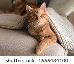 Olie Is A Blind Cat  Lovely Guy