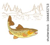 Brown Trout Fish Realistic drawing Vector illustration. American trout swimming in water isolated on white. Salmo trutta freshwater fish. Fishing theme vector.