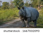 The indian rhinoceros ...