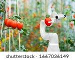 Smart Robotic Farmers Tomato In ...