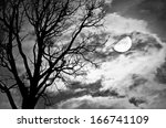 Silhouette Of Dead Tree Against ...