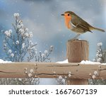 A Robin Perched In Winter  Snow ...