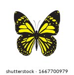 Black And Yellow Butterfly ...