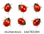 Ladybugs Isolated On White...