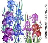 watercolor irises in a...   Shutterstock . vector #166787873