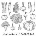 farm vegetables vector sketches.... | Shutterstock .eps vector #1667882443