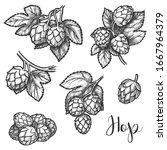hops sketch  vector beer... | Shutterstock .eps vector #1667964379