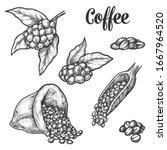 coffee beans sketch  vector... | Shutterstock .eps vector #1667964520