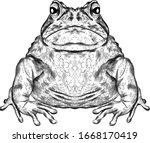 Toad Black And White Sketch...