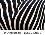 Zebra Background. Zebra...