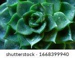 Wet Green Succulent Plant Clos...
