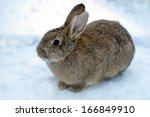 Rabbit On Snow