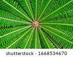 Abstract Symmetrical Leaves Of...