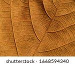 Brown Teak Leaves Texture ...