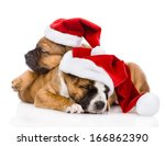Two Cute Puppy With Santa Hat....