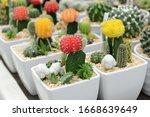 cactus beautiful plant summer...   Shutterstock . vector #1668639649