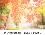 Beautiful Autumn Leaves In...