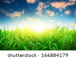green corn field under colorful ... | Shutterstock . vector #166884179