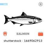 vector salmon fish illustration ...   Shutterstock .eps vector #1669062913