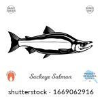 vector sockeye  red  salmon... | Shutterstock .eps vector #1669062916
