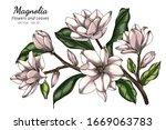 white magnolia flower and leaf... | Shutterstock .eps vector #1669063783