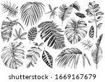 black and white hand drawn set... | Shutterstock .eps vector #1669167679