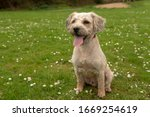 Cute Mixed Breed Puppy In...