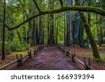 Trail Into Big Basin State Park