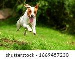 Dog Running Toward Russell...