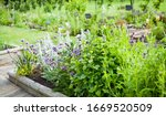 Beautiful Blooming Herbal...