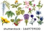 Watercolor Herbal Set Of...