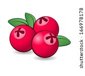 Cartoon cranberry with green leaves on white background. - stock vector