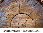 Chopped Tree Wood Cross Section ...