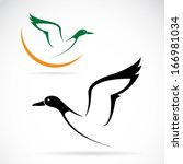 vector of flying wild duck... | Shutterstock .eps vector #166981034