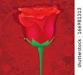 vector red rose flower...   Shutterstock .eps vector #166981313