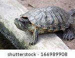 head of the turtle beside the... | Shutterstock . vector #166989908