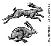 Wild Hares. Rabbits Are Jumping....