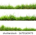 Green grass isolate on white...