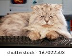 Stock photo cute young cat lying on computer keyboard 167022503
