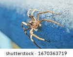 Macro Photo Of A Wolf Spider