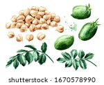 Chickpeas Green Pods  Peas And...