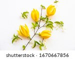 yellow flowers ylang ylang... | Shutterstock . vector #1670667856