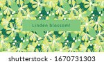 Linden Tree Flowers And Leaves...