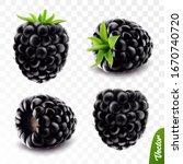 3d Realistic Vector Berries ...
