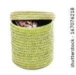 little kitten in wicker basket...   Shutterstock . vector #167076218
